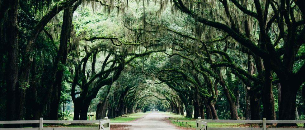 Oak tree lined road in Savannah Georgia