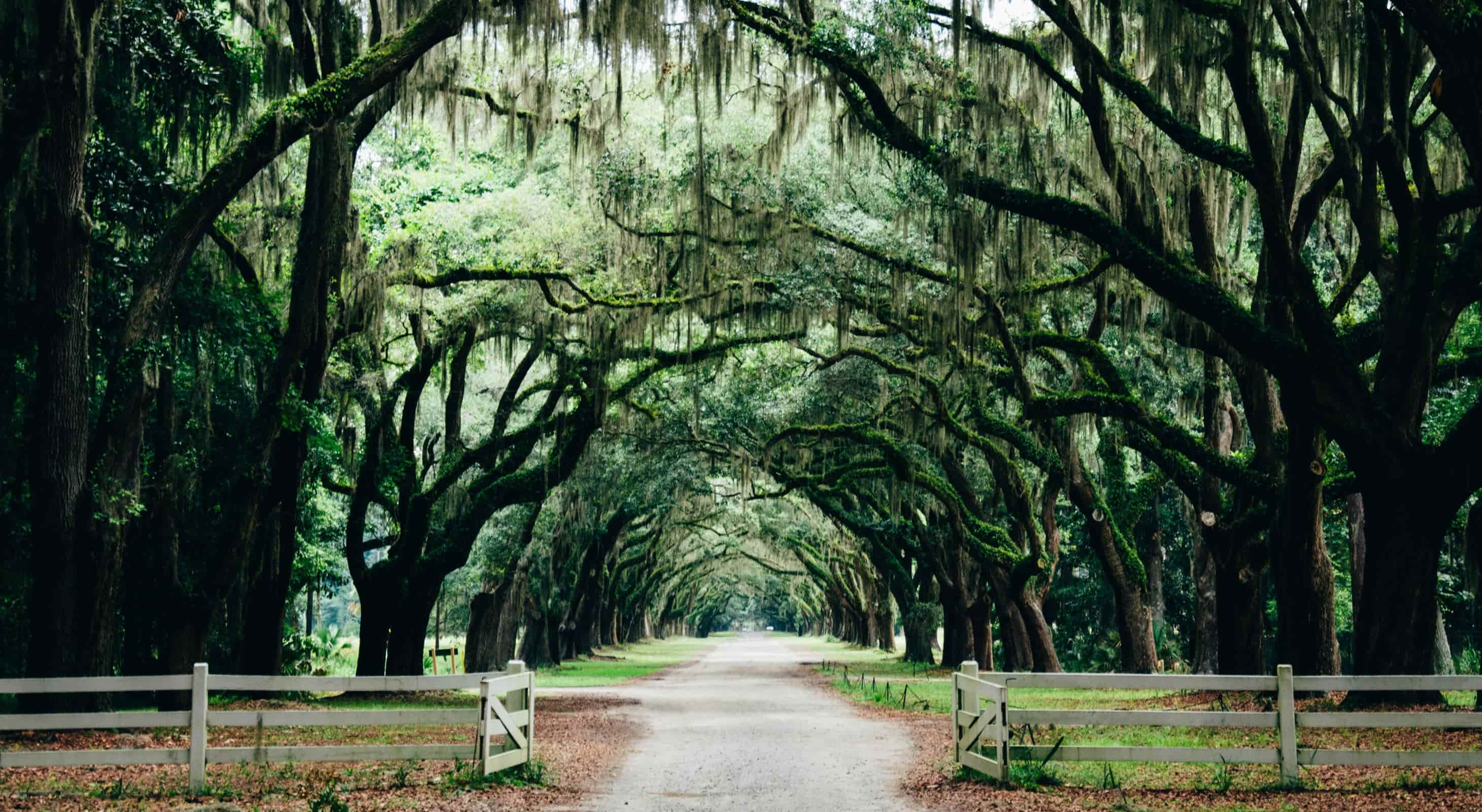 Oak tree lined road in Savannah Georgia