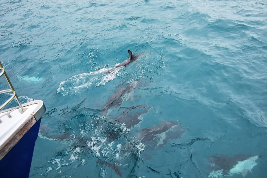a pod of dolphins swimming near a boat